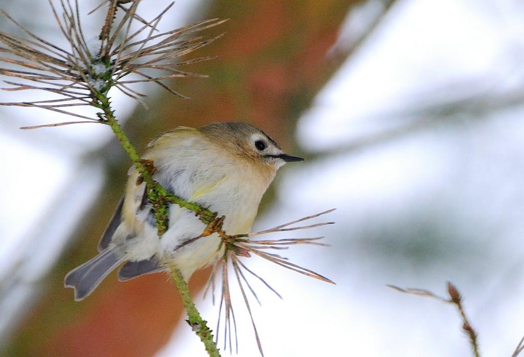Birds - Vogels