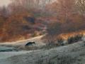 _Deers - Deer- Herten - Hert